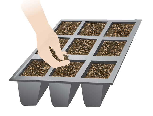 coltivare invidia riccia da cespo