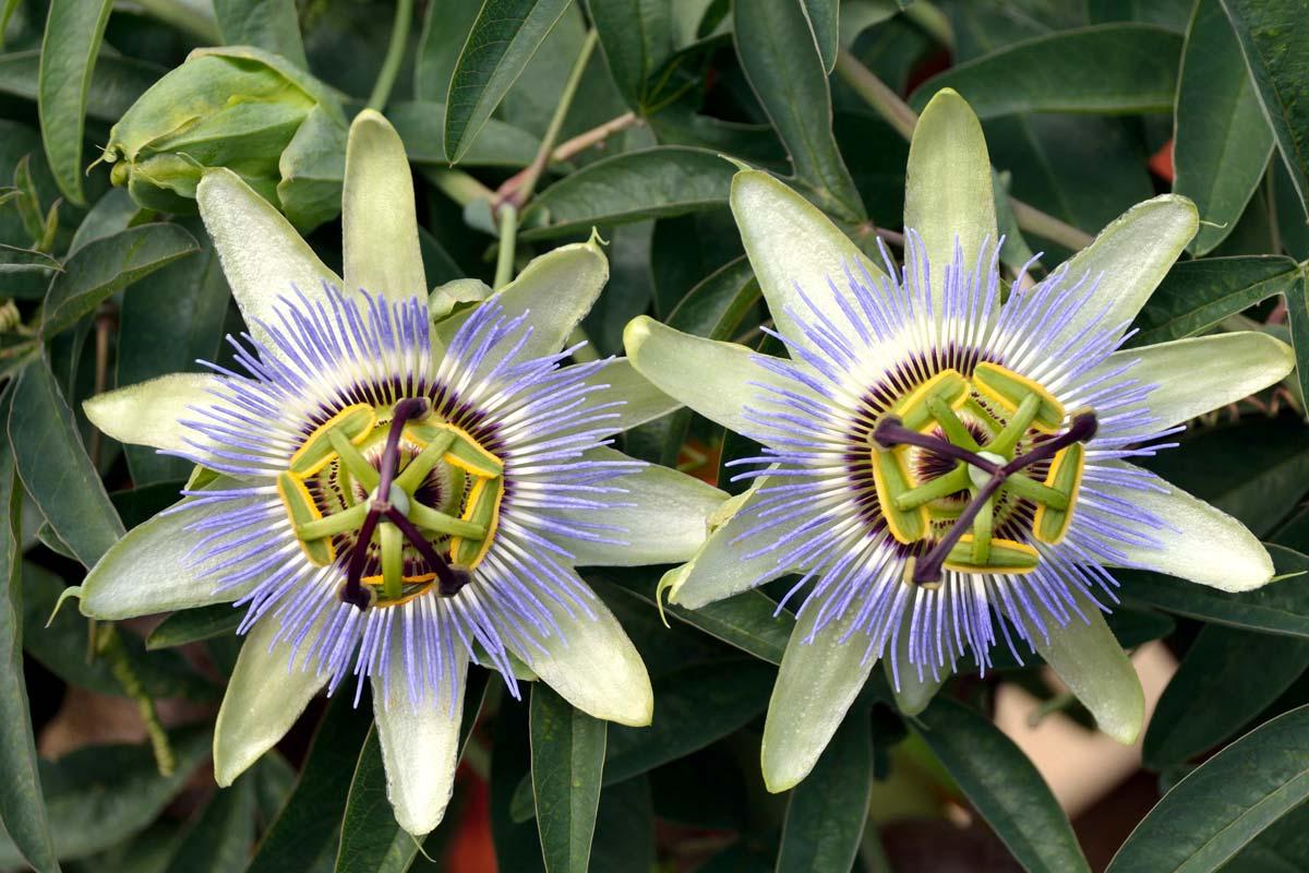 Fiori Di Stagione Settembre fiori di settembre   19 specie per un autunno colorato