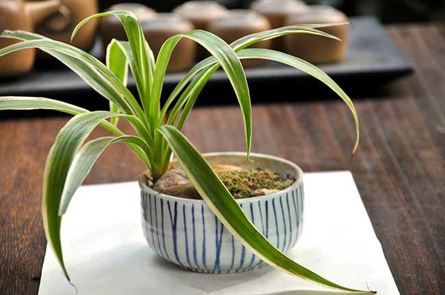 Piante Da Appartamento Yucca.Yucca In Vaso E Giardino Fai Da Te In Giardino