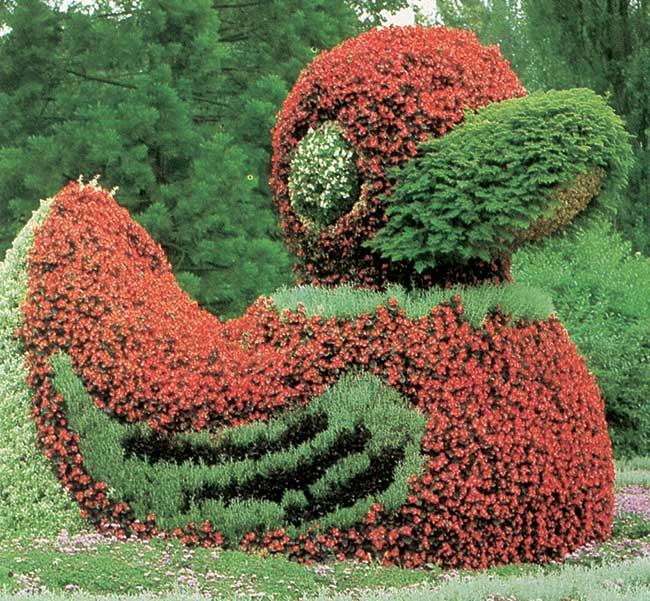 Arte topiaria tecniche e piante adatte fai da te in - Arte e giardino ...