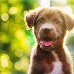 Cuccioli di cane | Adottare un cane ed educarlo