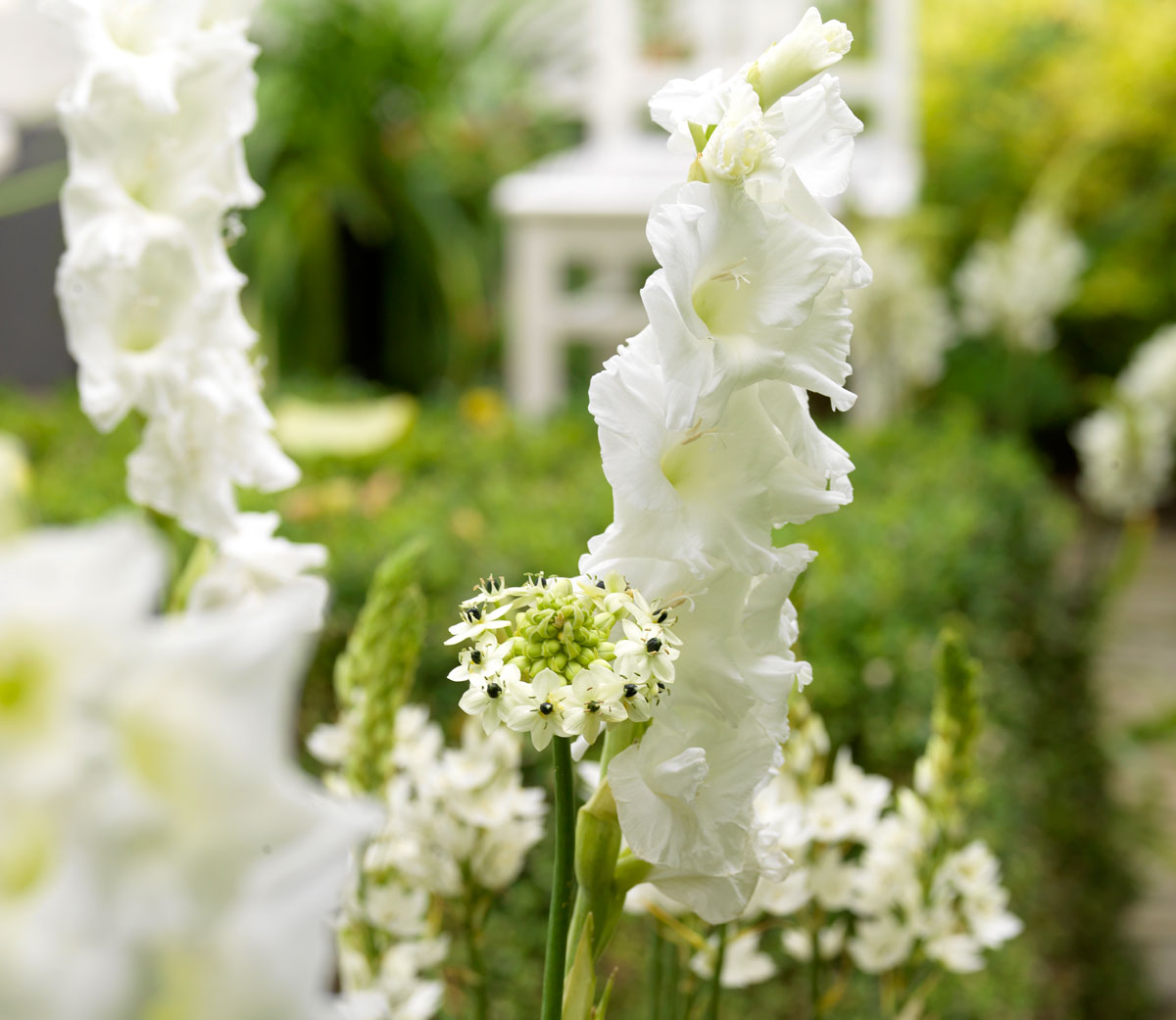 Fiori A Palla Nome.Fiori Bianchi La Luminosita Del Bianco In Giardino