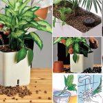 Idrocoltura | Come coltivare piante senza terra
