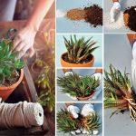 Moltiplicazione piante grasse | Come riprodurle fai da te