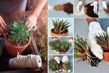 moltiplicazione piante grasse