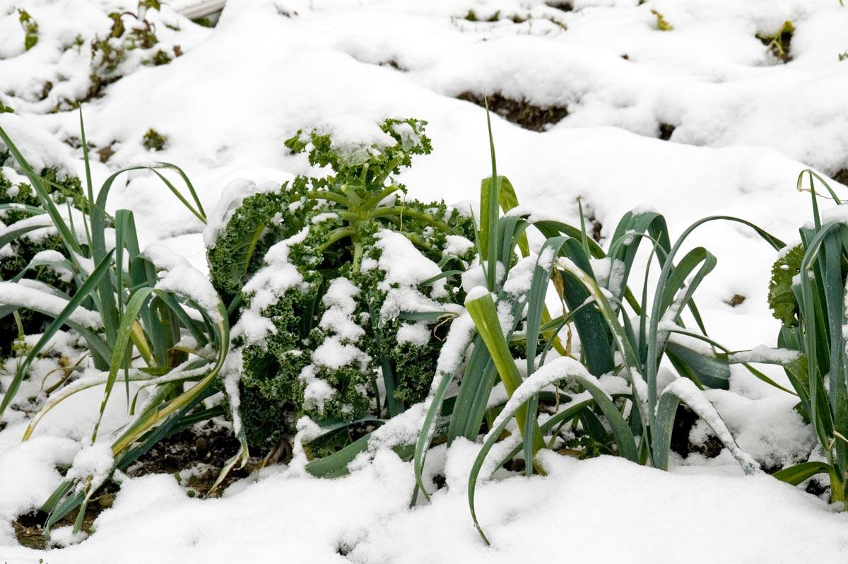 orto invernale