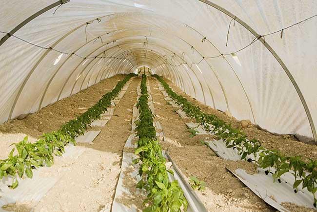 Orto invernale cosa piantare ortaggi e verdure fai da for Cassoni per orto rialzato