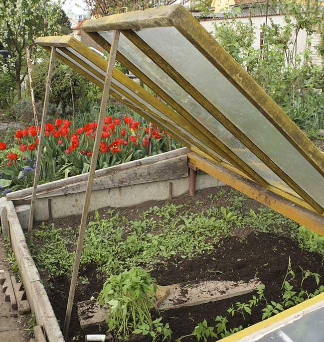 Orto invernale cosa piantare ortaggi e verdure fai da for Cosa piantare nell orto adesso