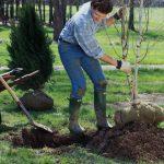 Trapianto alberi | Come si fa e quando farlo