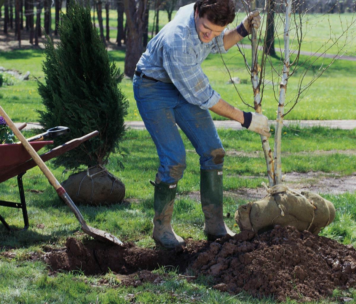 Prezzi Alberi Da Giardino trapianto alberi | come si fa e quando farlo