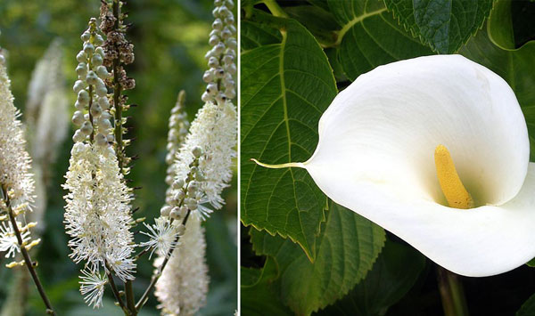 Fiori bianchi la luminosit del bianco in giardino for Arbusto dai fiori rosa e bianchi