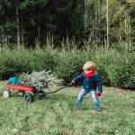 Abete | Come crescere il nostro albero di Natale