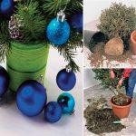 Abete di Natale | Come rinvasarlo correttamente