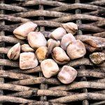 Cicerchia | Legume tossico? Coltivazione e proprietà