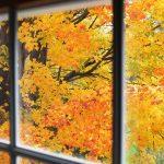 Colori d'autunno | Quali sono gli arbusti resistenti?
