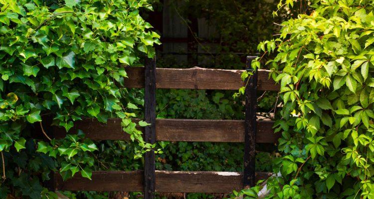 Piante da giardino sempreverdi e fiorite quali scegliere for Piante tappezzanti perenni