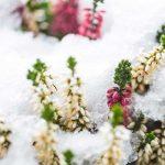 Fiori invernali | Quali sono? Un elenco dettagliato