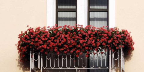 Fiori da balcone
