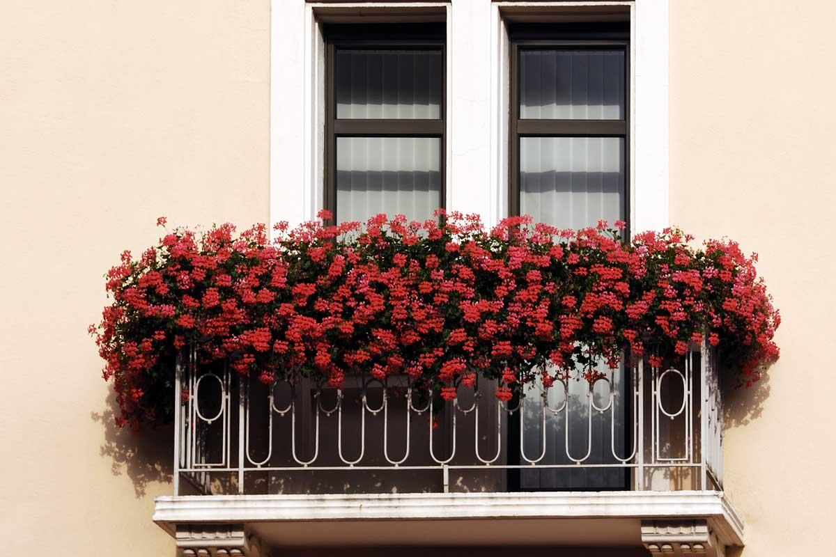 Fiori da balcone dai gerani alle surfinie le strategie for Fiori da balcone perenni