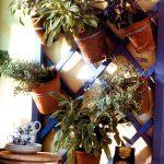 Piante aromatiche in vaso | Utilizziamo una griglia aromatica