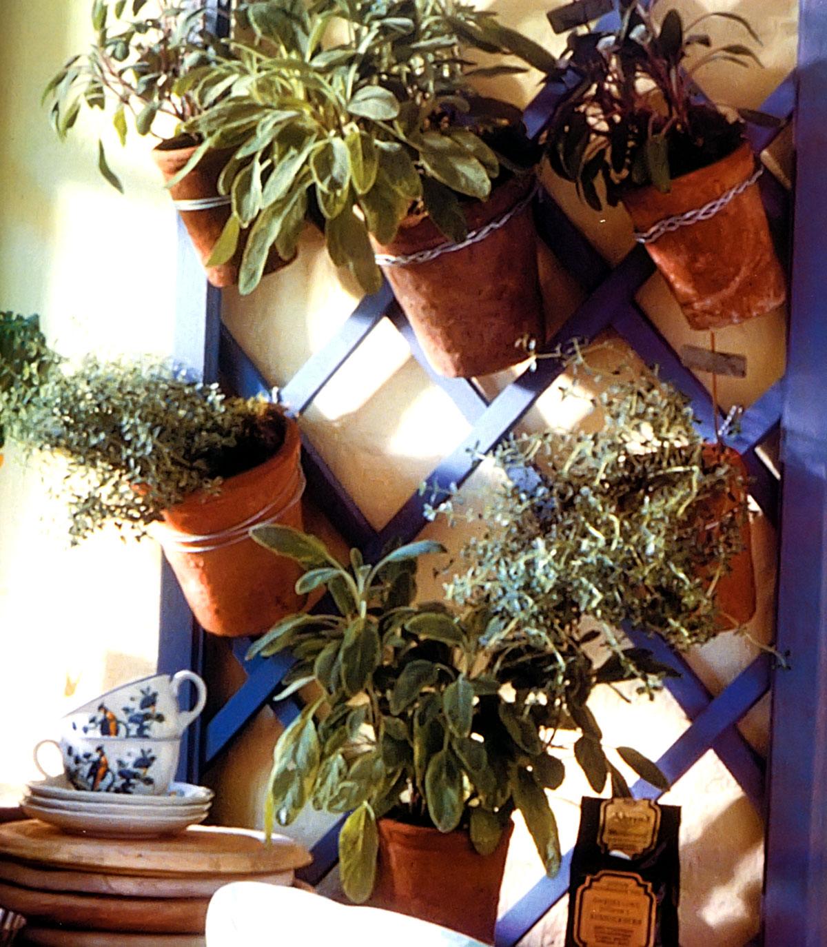 Piante aromatiche in vaso utilizziamo una griglia aromatica for Piante rampicanti in vaso