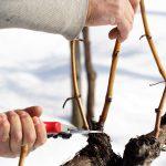Potatura invernale | Come e perché effettuarla