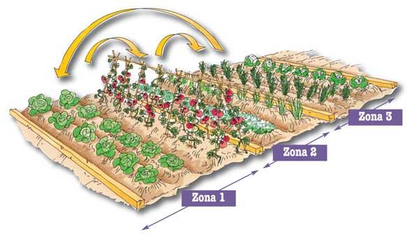orto rotazione colture schema