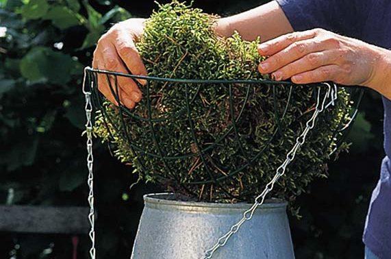 Vasi per piante le soluzioni per le fioriture in vaso for Vasi erba
