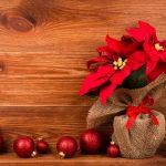 Stella di Natale | Guida all'acquisto