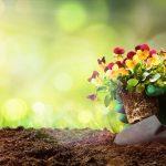 Terriccio | A ciascuna pianta il suo terreno