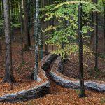 Val di Sella | La vera arte nel bosco