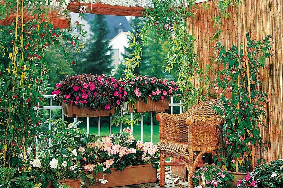 Vasi per piante le soluzioni per le fioriture in vaso - Piante per giardino ...