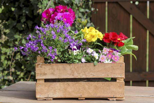 Vasi per piante | Le soluzioni per le fioriture in vaso
