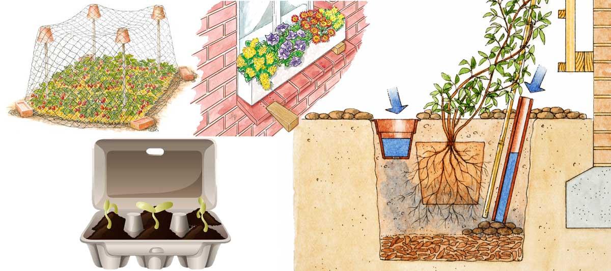 10 idee giardino fai da te trucchi per il giardinaggio for I fiori della balsamina