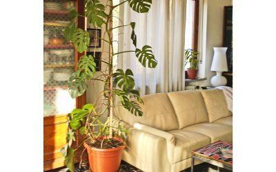 Tutore per piante rampicanti