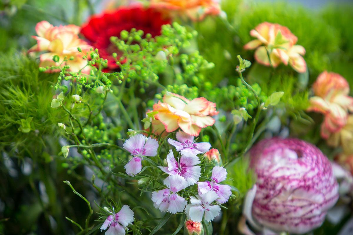 7 piante ideali per contenitori for Contenitori da giardino