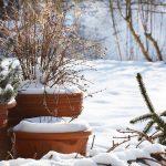 Burian e piante | 5 consigli pratici per proteggerle