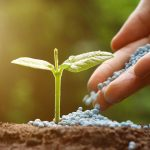 Fertilizzanti | Organici o chimici? Guida per non sbagliare