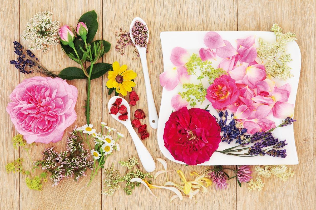 Fiori commestibili quali sono propriet e ricette for Fiori da esterno