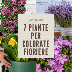 7 piante ideali per contenitori
