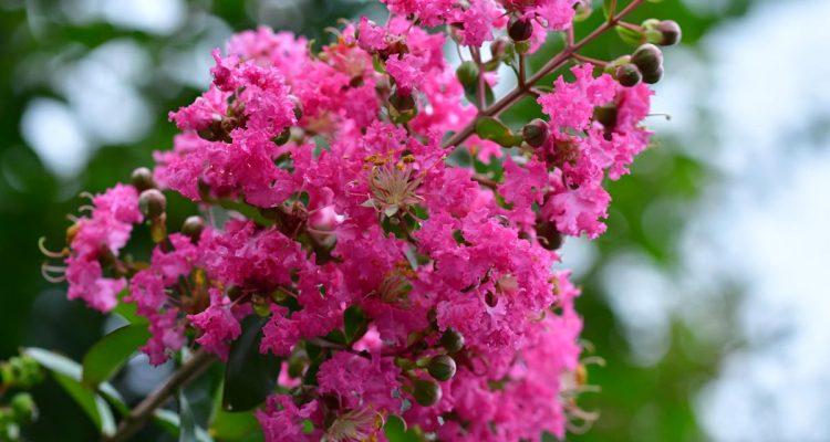 Piante da giardino sempreverdi e fiorite quali scegliere for Arbusto dai fiori rosa e bianchi
