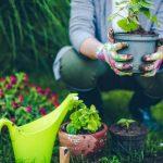 Lavori di giardinaggio | Ecco cosa fare a Febbraio