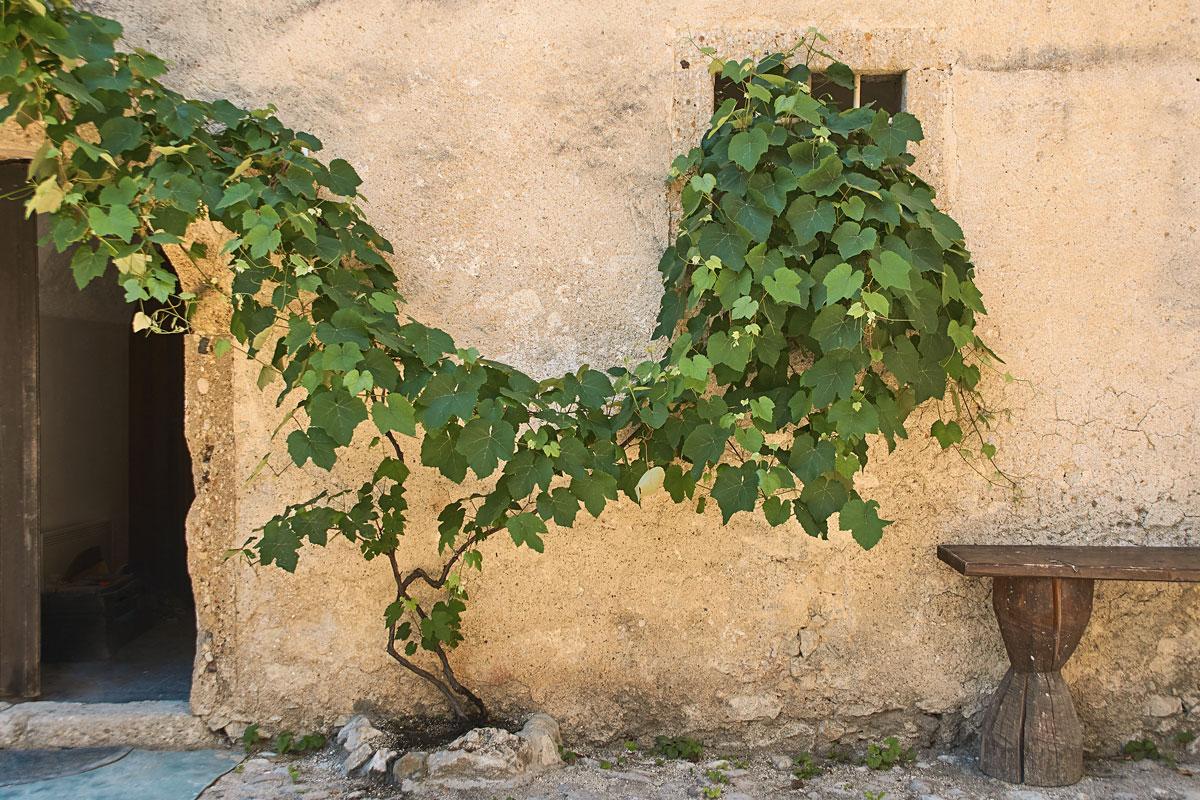 5 rampicanti e arbusti per muri all 39 ombra for Piante rampicanti
