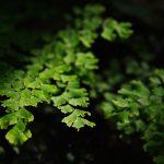5 piante ideali per luoghi umidi e ombreggiati