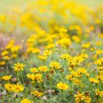 5 piante che si prestano a formare prati