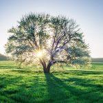 Qual è l'età del mio albero?