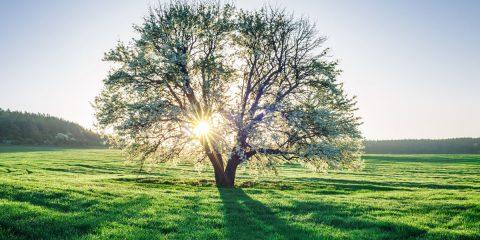età-albero