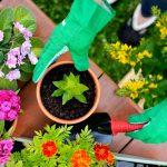 Terra da giardino | Si può usare per le piante in vaso?