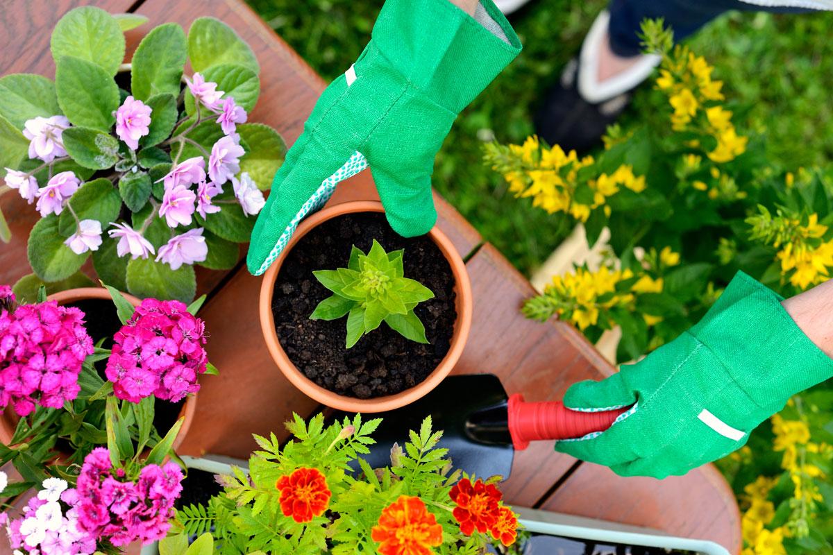 Terra da giardino si pu usare per le piante in vaso - Acquisto terra per giardino ...