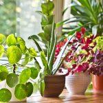 Piante d'appartamento | Le soluzioni in aprile e maggio